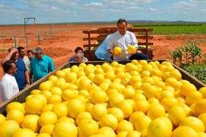 O refrescante melão que brota do semiárido nordestino