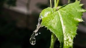 Água da irrigação pode afetar pH do substrato