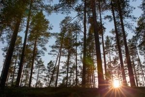 Projeto Florestas do Futuro tem reconhecimento internacional