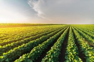 Soja supera milho em área plantada em São Paulo, diz IEA
