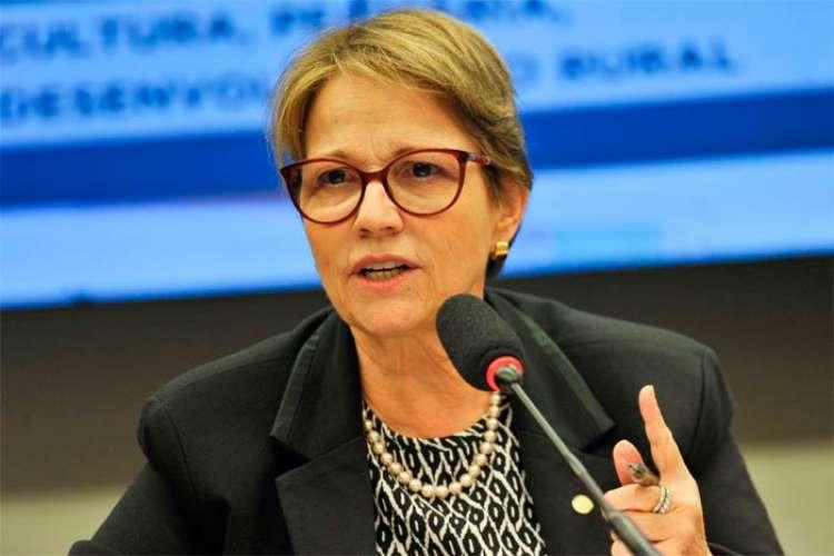 Ministra da Agricultura assina memorando do Projeto Coalizão Soja 4.0 no Agrobit