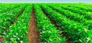 Normativa de uso de agroquímicos em Minor Crops completa 5 anos
