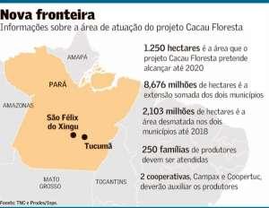 Projeto elege cacau para recuperar a Amazônia