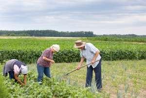 Governo e sociedade civil discutem propostas para a agricultura familiar