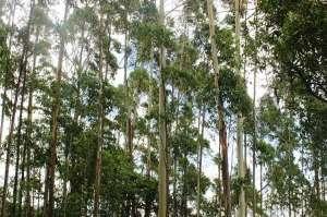 Projeto cria política nacional para incentivar agroextrativismo