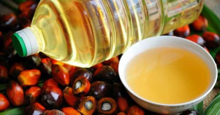 Produção de óleo de palma deve afetar a soja