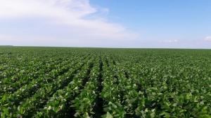 Importações chinesas de soja dos EUA atingem menor patamar desde 2008, compras no Brasil aumentam 126%