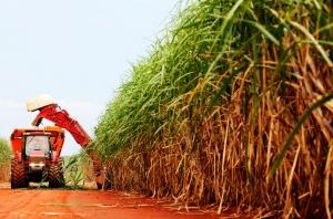 Comissão de Cana-de-açúcar da FAESP intensifica debates sobre RenovaBio e CONSECANA