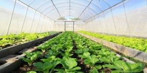 Criado plástico biodegradável para estufas