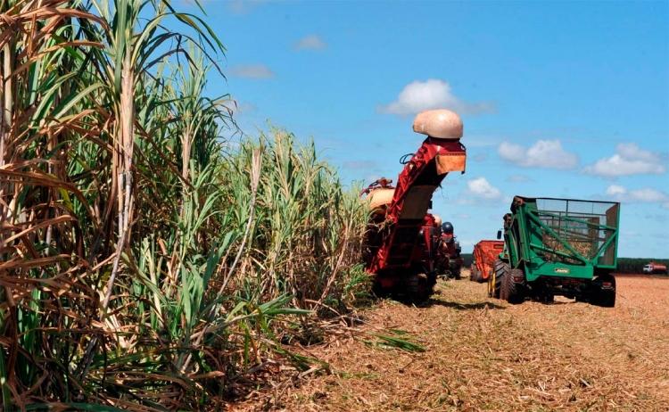 Unica prevê que desfecho de painel na OMC contra Índia será favorável ao Brasil