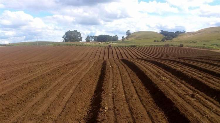 Restauração do solo pode enfrentar mudança climática