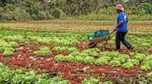 Mapa suspende mais de 126 mil declarações da agricultura familiar