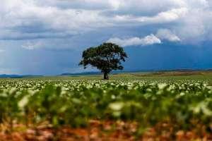 Chuvas escassas podem atrasar início do plantio de soja no Centro-Oeste