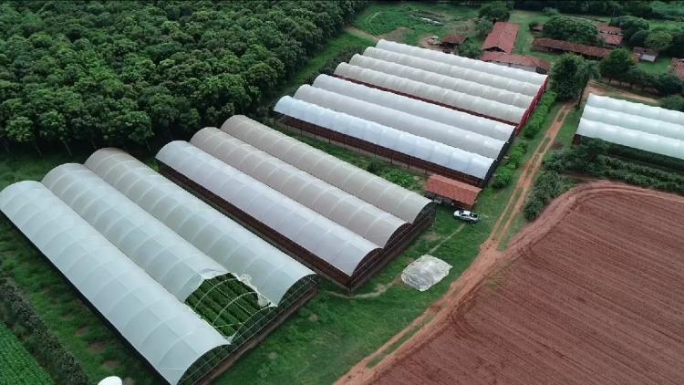 Produtores rurais de Itápolis apostam em estufas para otimizar safra