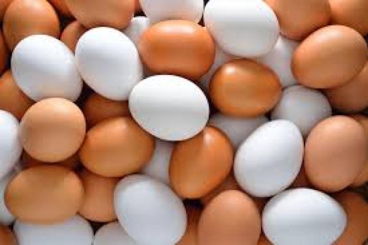 Países importadores de ovos comerciais in natura no primeiro bimestre de 2019