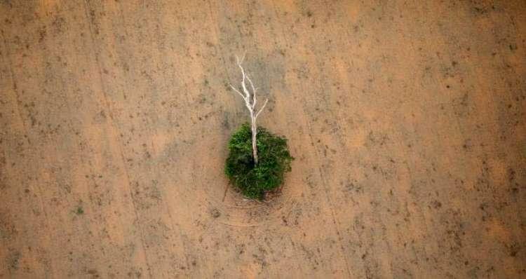 Europa alerta para riscos de fim da Moratória da Soja na Amazônia