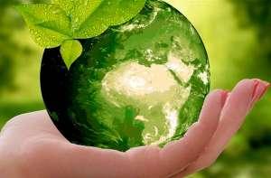 Levará 150 anos para as florestas se recuperarem totalmente
