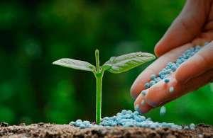 Fertilizantes, corretivos e substratos para plantas passam a ter registro automático