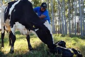 Fiscais agropecuários farão treinamento em boas práticas e bem estar animal