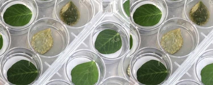 Benefícios dos bioherbicidas