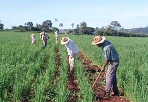 Pronaf: agricultores familiares terão desconto de até 69% em financiamento