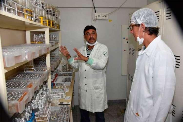Ceplac desenvolve pesquisa com fungos para estimular crescimento de plantas