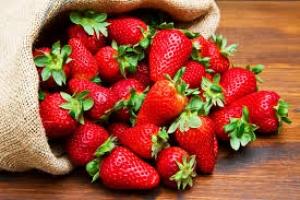 Morango: Secretaria de Agricultura abre inscrições em março para o Programa Plante Mais
