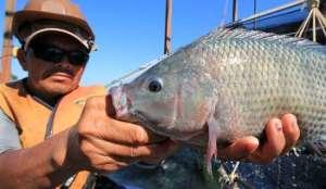 Mato Grosso do Sul em primeiro lugar no ranking dos exportadores carne de peixe