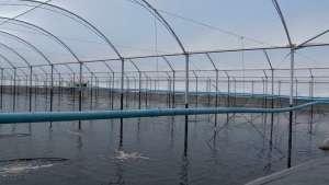 Criação de camarão na cidade de Canavieiras/BA