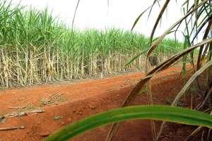 Alta do petróleo e preços do açúcar fazem Brasil bater recorde na produção de etanol