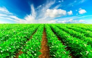Conceitos de agricultura sustentável estão ultrapassados