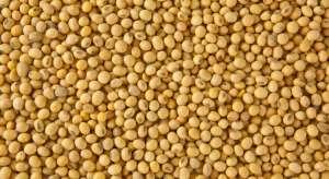Relatório do USDA traz números positivos para a soja a médio e longo prazos, ao indicar queda na produção sem perdas na demanda