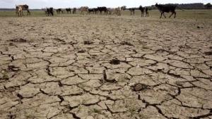 Alemanha cria mecanismo de alerta de seca
