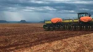 Segredo das altas produtividades está na semeadura