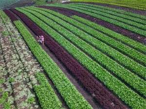 Produção de hortaliças cresce 80% em dez anos no Paraná
