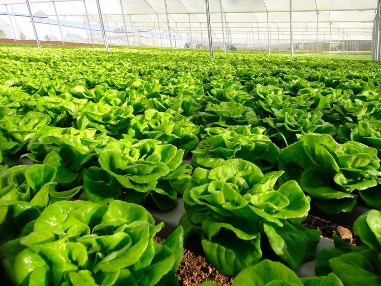 Feira reúne agricultores e traz novidades para o cultivo de hortaliças em Bragança Paulista (SP)