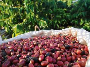 SCA lança Programa de Sustentabilidade do Café