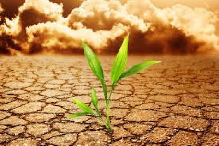 Alterações climáticas exigem melhoramento de plantas