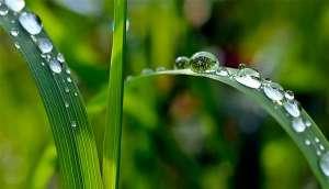 Plantas entram em pânico quando chove