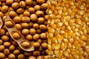 EUA 2019/20: USDA estima redução de 5% na área de soja e aumento de 4% no milho