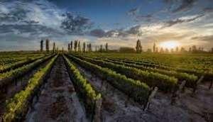 Ministra anuncia fundo para modernização do setor de vinho