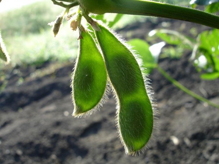 Investidores pedem fim de desmatamento ligado à produção de soja