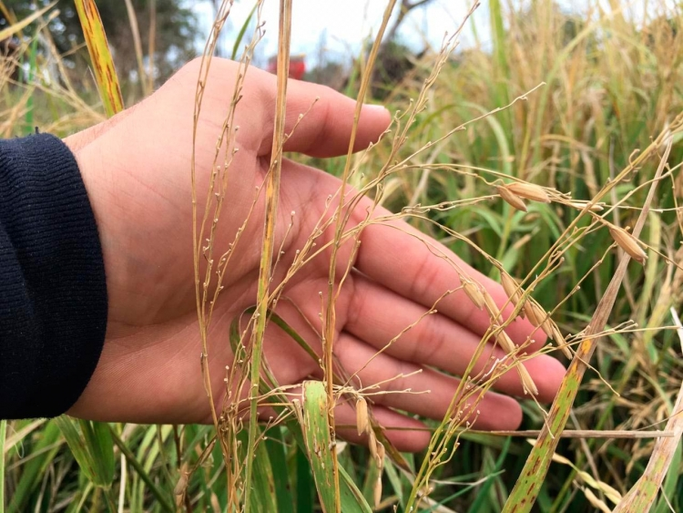 Secretaria de Agricultura dispõe de recursos para produtores rurais afetados com variações climáticas