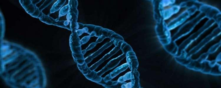 Soja OGM abre caminho para novos alimentos com CRISPR