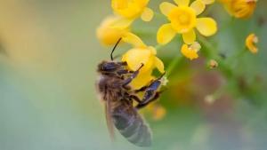 Mundo pode perder abelhas e ter mais baratas e moscas