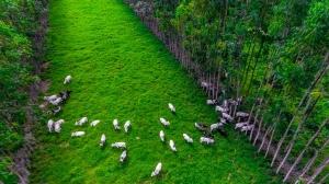 Embrapa e Marfrig se unem para desenvolver mercado de carne sustentável