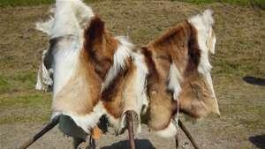 Pressão de baixa ganha força no mercado do couro