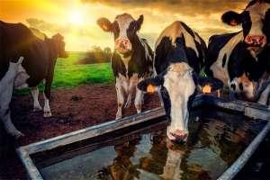 Sustentabilidade e produção de leite - desafios e oportunidades