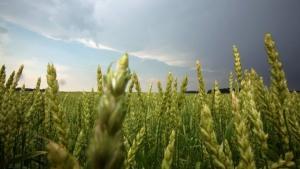 Argentina amplia lista de defensivos para minor crops