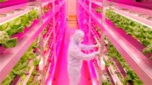 LED pode ser usado na horticultura vegetal